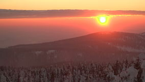 Sunrise in the forest stock footage