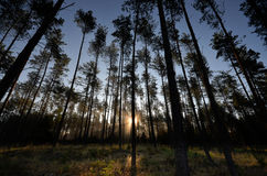 Sunrise in the forest in Drawskie Lakeland (Poland) Royalty Free Stock Image