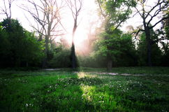Sunrise in the forest. Eye-catching sunbeam come through the trees and falls on the meadow Stock Images