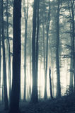 Sunrise in a forest with fog. Sunrise in a dark forest with fog Stock Photography