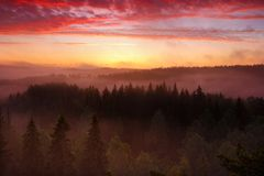 Sunrise in forest Royalty Free Stock Photos