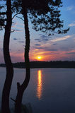 Sunrise on the forest lake with the pine tree in the foreground. Stock Image