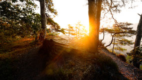 Sunrise in the forest near Dahn Stock Photo