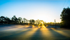 Sunrise in forest Stock Image