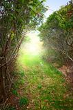 Sunrise forest path. And fog Stock Photography