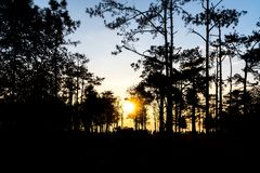 Sunrise in the forest. Phukradueng National Park. Thailand.  royalty free stock image