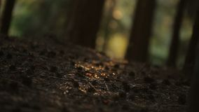Insects swarming in the stream of sun on the grass, crop canopy stock video footage