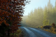 Sunrise on forest road Stock Image