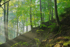 Sunrise on the  forest slope. Sunrise on the forest slope with trees Royalty Free Stock Image
