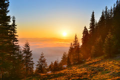 Sunrise forest Royalty Free Stock Image