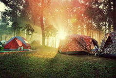 Sunrise in the forest and the tents Royalty Free Stock Images