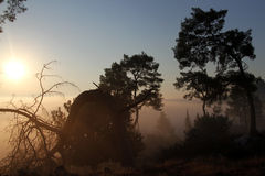 Sunrise and forest Royalty Free Stock Images
