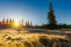 Sunrise in the forests of Apuseni Natural Park. Gorgeous autumn scenery among the spruce trees on the grassy meadow in dew. beautiful landscape in mountains of stock photos