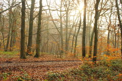 Sunrise in the Forrest in the fall Royalty Free Stock Photo