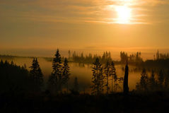 Sunrise in the Fprest. A scenic view of fog dispersed in the forest at sunrise Royalty Free Stock Image