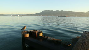 Sunrise Freighters English Bay dolly shot stock footage