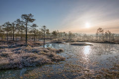 Sunrise in the frosty bog Stock Image