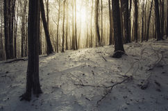Sunrise in frozen forest in winter Stock Photography