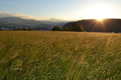 Sunrise on gold grass field Stock Image