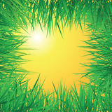 Sunrise grass Royalty Free Stock Photo