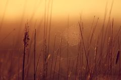 Sunrise in the grass royalty free stock images