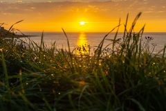 Sunrise through the grass with dew / Morning drew and a beautiful sunrise on sea / Seascape through the dew of the grass / stock photos