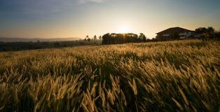 Sunrise in grass field Stock Photo
