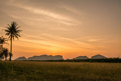 Sunrise at grass filed in Samroiyod nation park,  Thailand Royalty Free Stock Photo