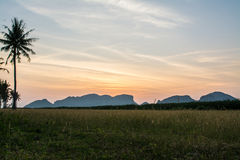Sunrise at grass filed in Samroiyod nation park,  Thailand Stock Images