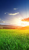 Sunrise in grean meadow Royalty Free Stock Image