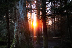 Sunrise in the Great Smoky Mountain National Park. The sun rises in the Great Smoky Mountain National Park. The sun is framed by some big trees Royalty Free Stock Image