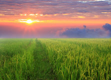 Sunrise and  green field. Stock Photo