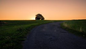 Sunrise Green Field Stock Images