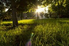Sunrise in the green garden. Morning sunrise in the green city park Stock Image