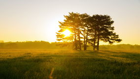 Sunrise in Green Meadow with Six Pines stock footage