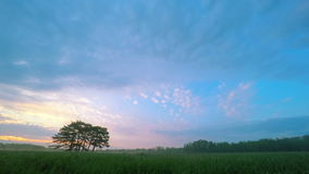 Sunrise in Green Meadow with Six Pines stock video