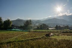 Sunrise with green rice field in Pua. The  northern of Thailand Royalty Free Stock Photography