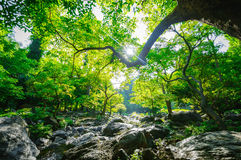 Sunrise and green tree in the forest Royalty Free Stock Image
