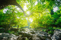 Sunrise and green tree in the forest Royalty Free Stock Photo