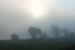 Sunrise among green trees and field with a dense fog Stock Photography