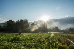 Sunrise with green vegetable garden in Pua. The  northern of Thailand Royalty Free Stock Photography