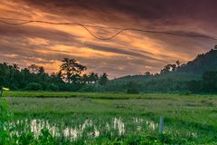 Sunrise at Havelock. Paddy Fields and sunrise in Havelock Island , Andaman and Nicobar stock images