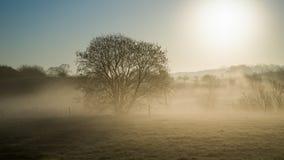 Sunrise haze park Stock Photography