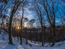 Dawn in the Hermitage. Sunrise in the Hermitage of Braid and Blackford Hill, with trees in the foreground. Crisp snowy morning in January, blue skies and low sun Royalty Free Stock Image