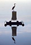 Sunrise Heron Royalty Free Stock Images