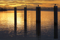 Sunrise Herons on Pilings Royalty Free Stock Images