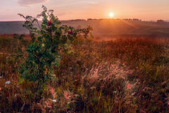 Sunrise in hills in Russia Stock Images
