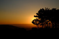 Sunrise in the hilly district with growing pines Stock Images