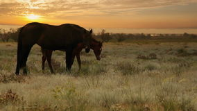 Sunrise horses stock video footage