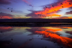 Sunrise At Hula Lake Park Royalty Free Stock Image